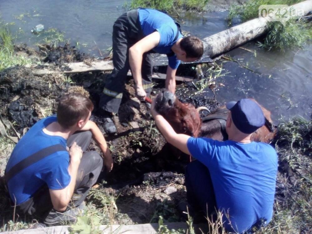 В Луганске из болота тащили не бегемота - корову (ФОТО), фото-4
