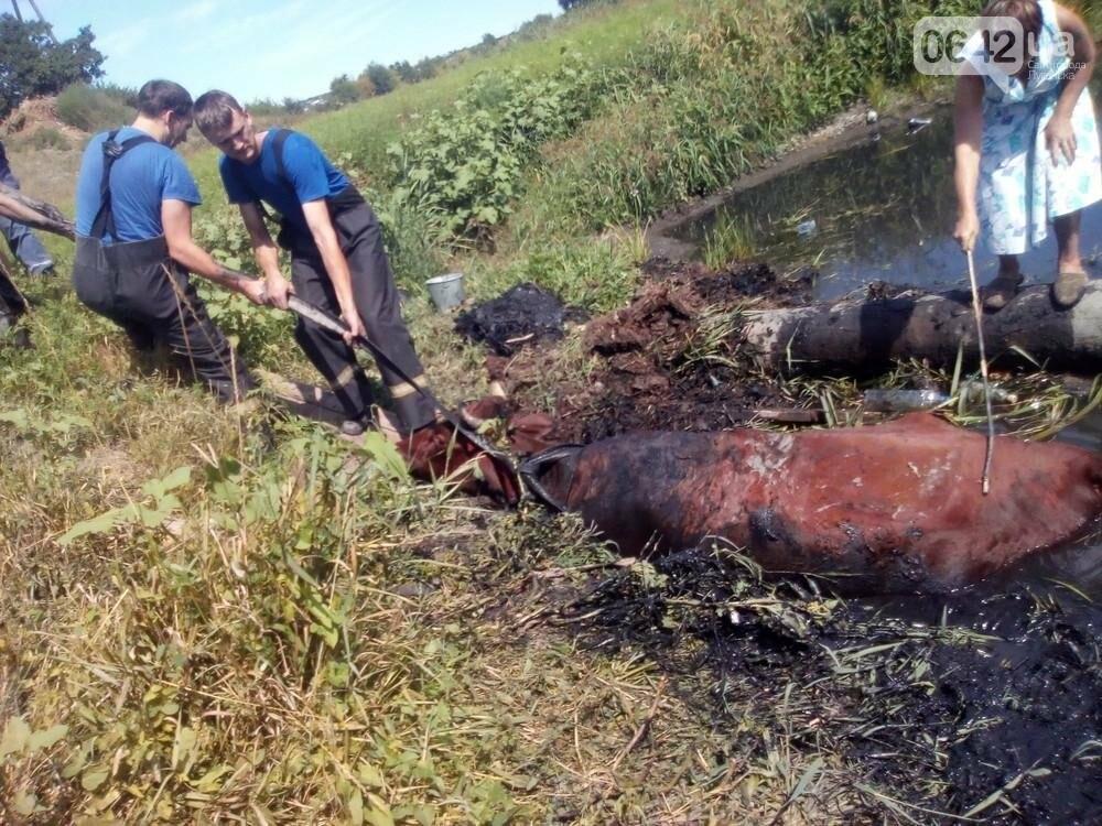 В Луганске из болота тащили не бегемота - корову (ФОТО), фото-6