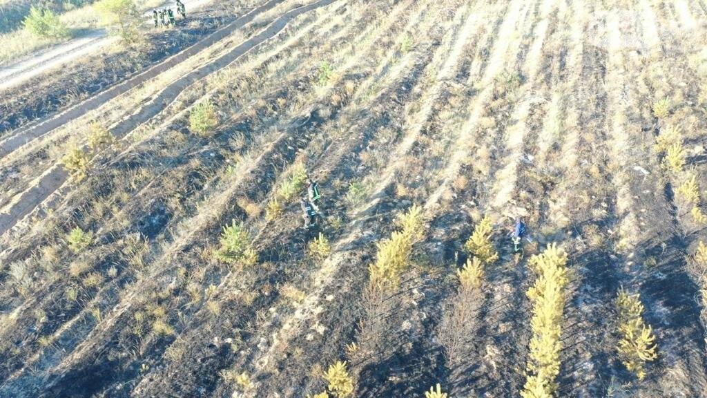 Пожар в Трехизбенском лесничестве ликвидирован, - ВИДЕО, фото-1
