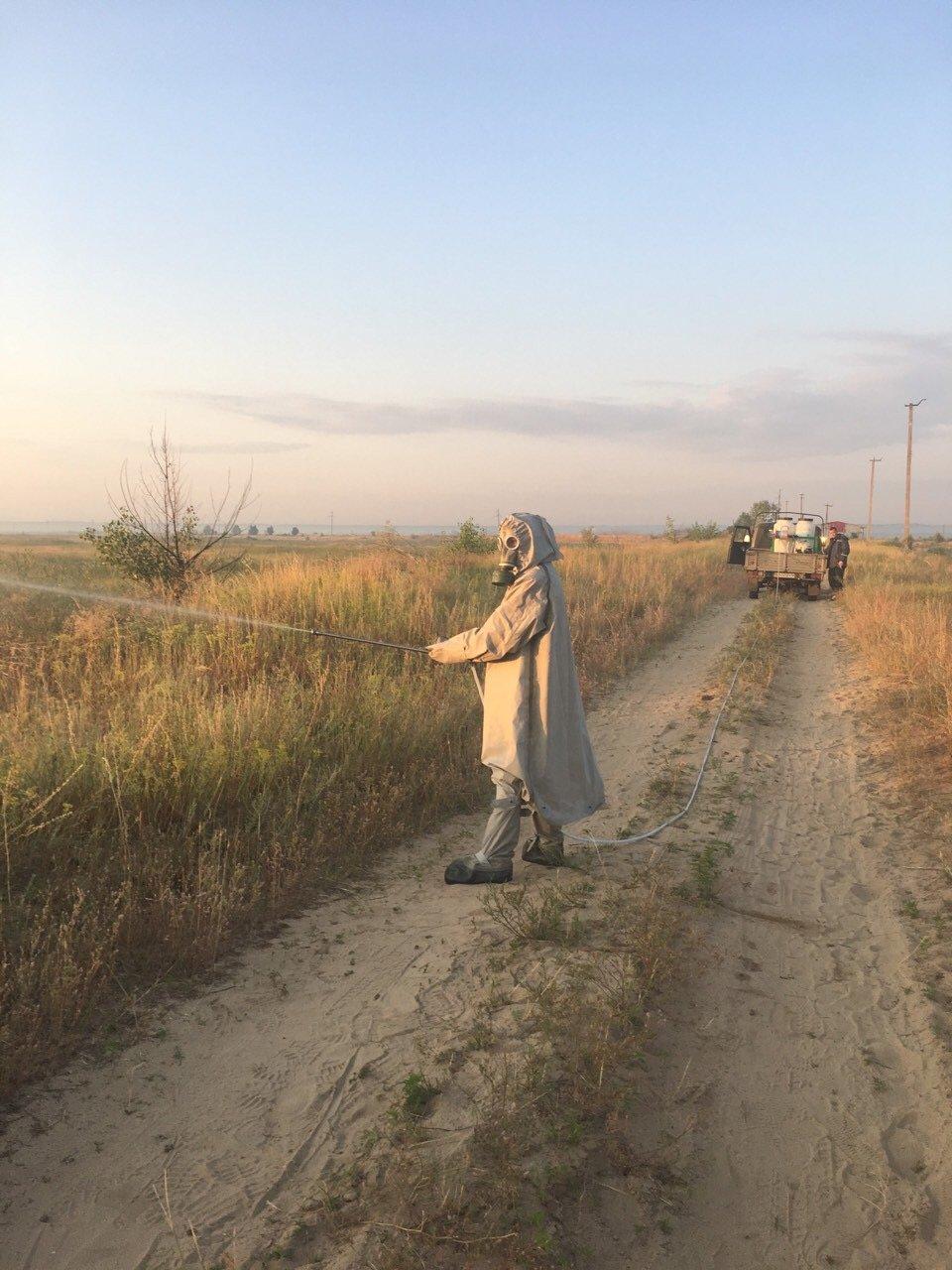 На Луганщину обрушилось нашествие саранчи, - ФОТО, фото-2