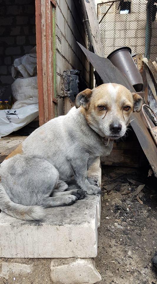 В Луганской области во время пожара чудом спасся дворовый пес «Пончик», - ФОТО, фото-1