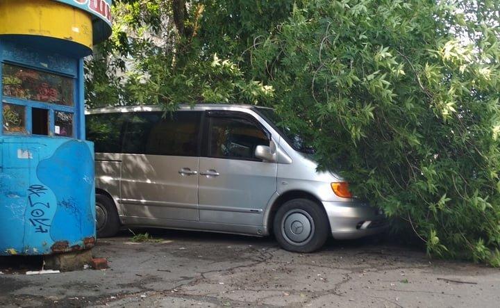 В оккупированном Луганске огромная ветка старого дерева упала на стоянку машин, - ФОТО, фото-1