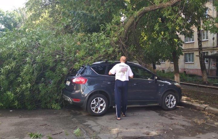 В оккупированном Луганске огромная ветка старого дерева упала на стоянку машин, - ФОТО, фото-3